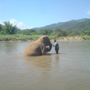 An elephant taking a bath at the wonderful Elephant Nature Park – a true sanctuary for mistreated and overworked Asian elephants.
